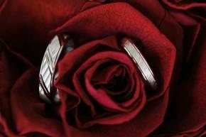 des alliances dans une rose